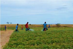 Novembre 2017: Décentralisation des pépinières ; des ressources pour les fermiers