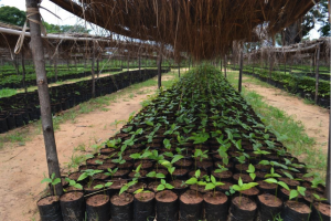 July 2019: Plant production and climate change