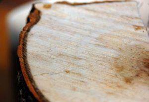Avril 2020: Tuv Sud vérifie la capacité de séquestration carbone des arbres plantés